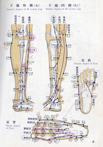 下肢.jpg