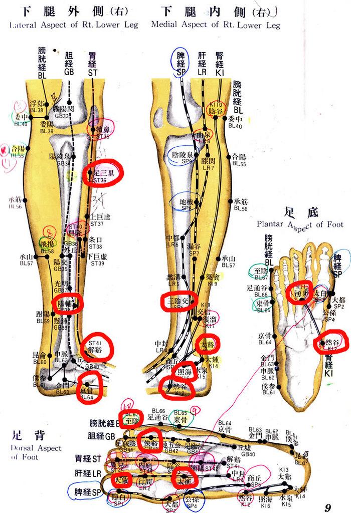 下腿&足.jpg
