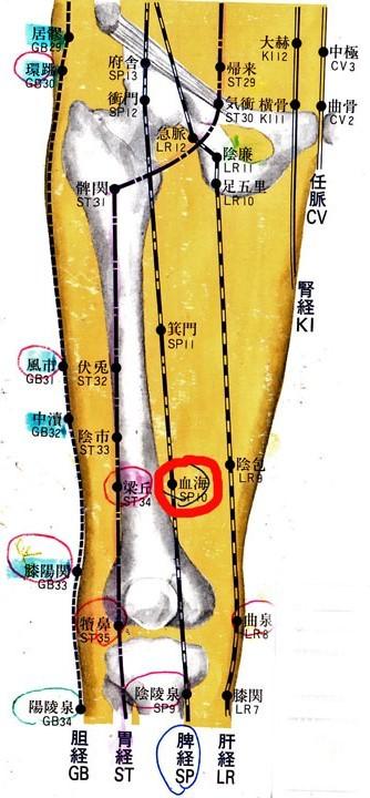 大腿前面.jpg