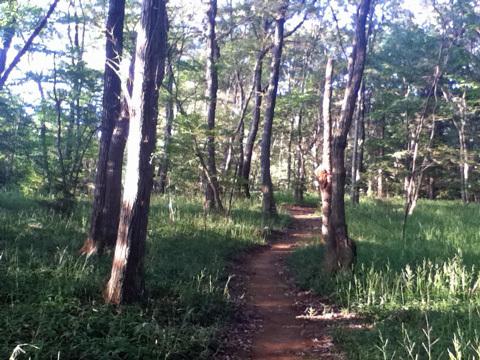 雑木林2.jpg