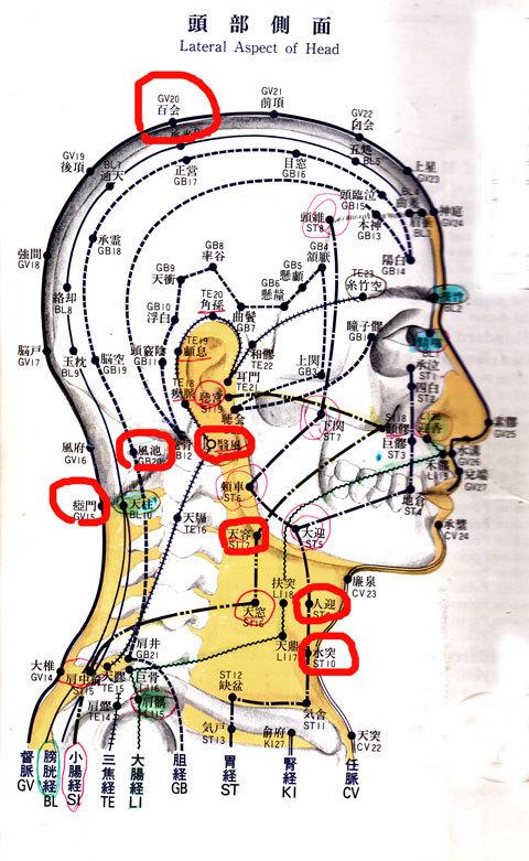 頭部側面.jpg